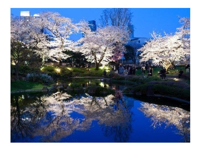 桜の名所おすすめの穴場スポット11:毛利庭園