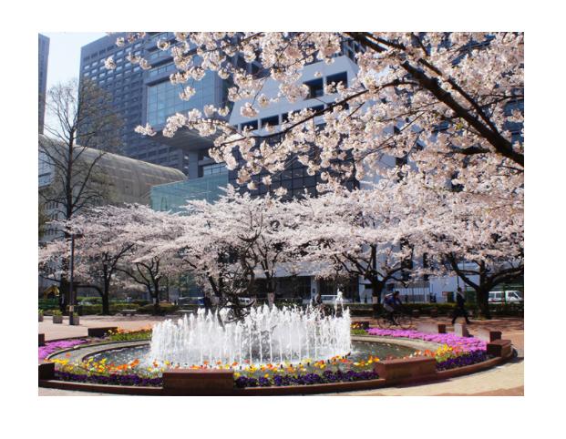 桜の名所おすすめの穴場スポット5:日比谷公園
